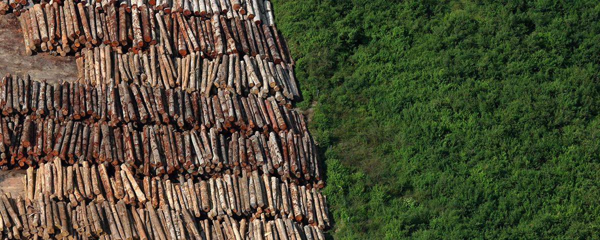 Três desafios ao desmatamento zero na Amazônia